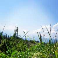 Blumen_Berge