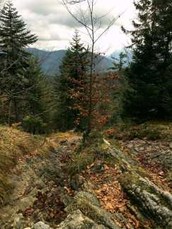 027_Abstiegs-Steig