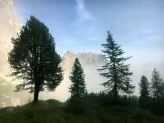 102_trees