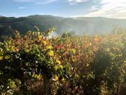 160_Douro_Valley_Weinreben