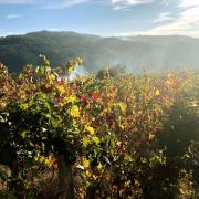 160_Douro_Valley_Weinreben